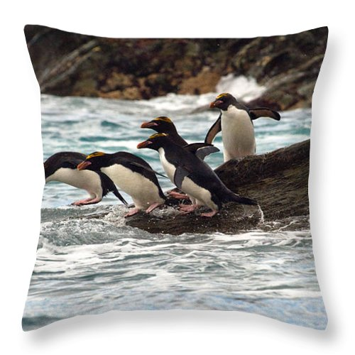 Animal Throw Pillow featuring the photograph Macaroni Penguin by John Shaw