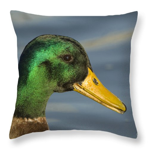 Nature Throw Pillow featuring the photograph Mallard Duck by John Shaw
