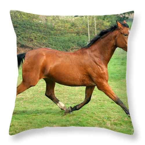 Grey Horse Throw Pillow featuring the photograph The Bay Horse by Angel Ciesniarska