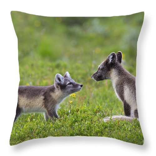 Arctic Fox Throw Pillow featuring the photograph 111130p054 by Arterra Picture Library