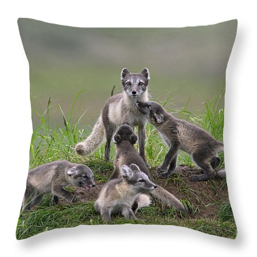 Arctic Fox Throw Pillow featuring the photograph 111130p059 by Arterra Picture Library