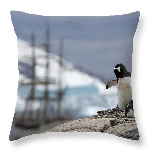 Gentoo Throw Pillow featuring the photograph 111130p158 by Arterra Picture Library