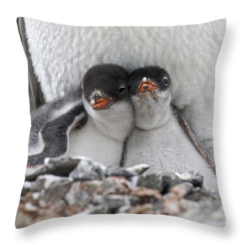 Port Lockroy Throw Pillow featuring the photograph 111130p166 by Arterra Picture Library