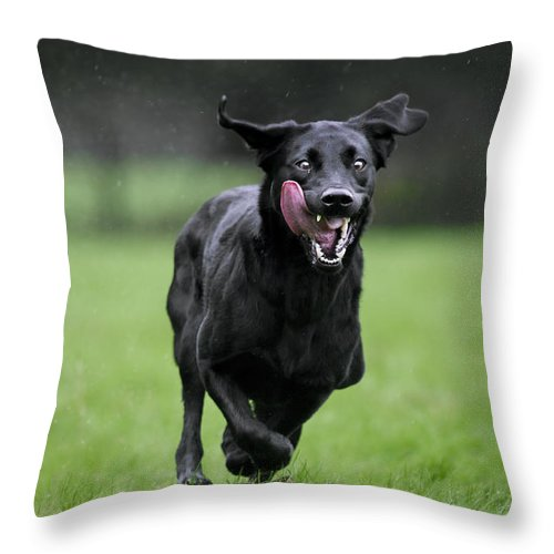Mammal Throw Pillow featuring the photograph 111130p196 by Arterra Picture Library
