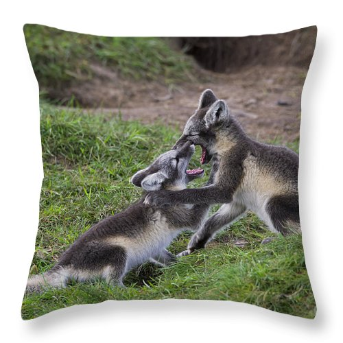 Arctic Fox Throw Pillow featuring the photograph 111216p027 by Arterra Picture Library