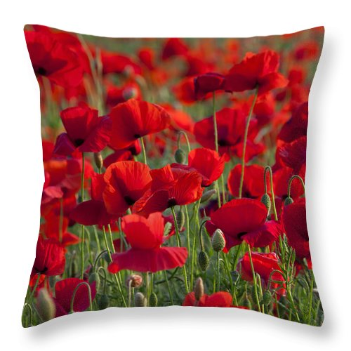 Papaver Rhoeas Throw Pillow featuring the photograph 111216p031 by Arterra Picture Library