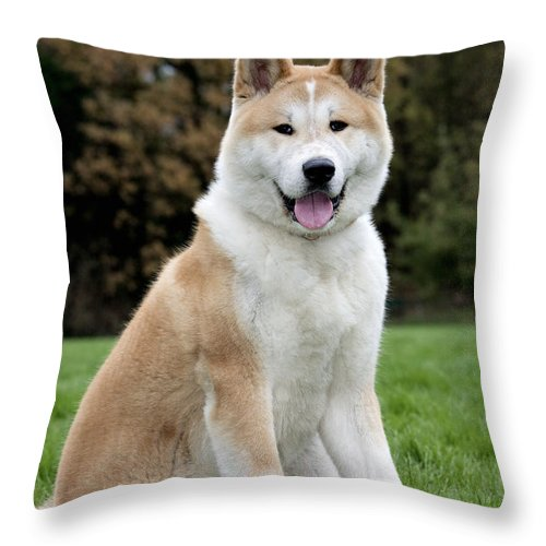 Akita Inu Throw Pillow featuring the photograph 111216p241 by Arterra Picture Library