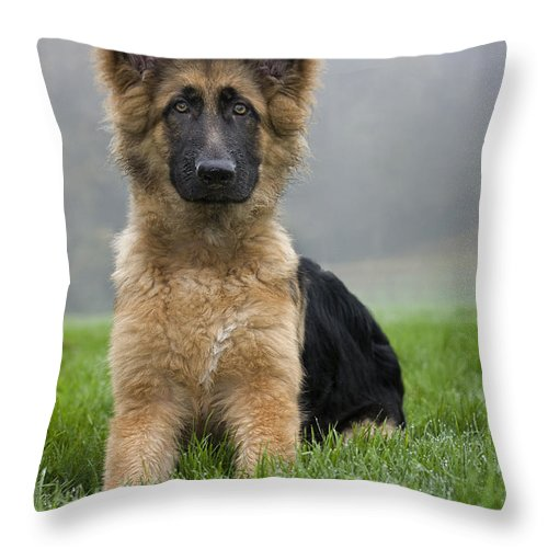 German Shepherd Throw Pillow featuring the photograph 111216p331 by Arterra Picture Library