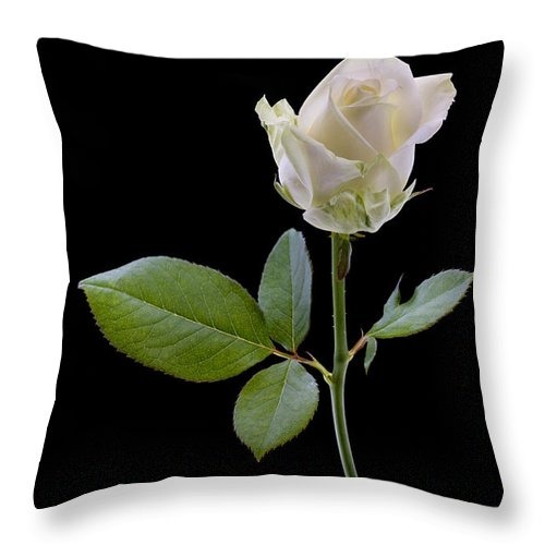 White Throw Pillow featuring the photograph 111216p340 by Arterra Picture Library