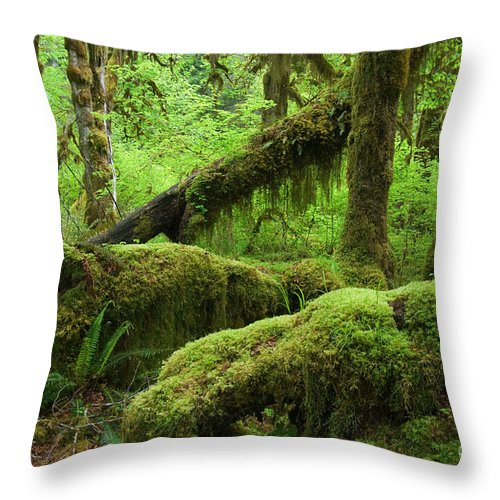 Moss-covered Throw Pillow featuring the photograph Olympic National Park by John Shaw