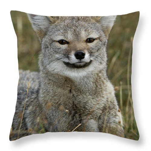 Patagonia Grey Fox Throw Pillow featuring the photograph Patagonia Grey Fox by John Shaw