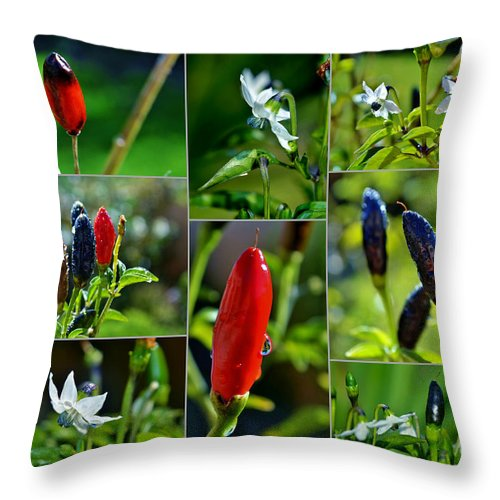 Red; Hot; Pepper; Chilli; Garden; Macro; Sunlight; Stem; Plant; Spring; Warm; Nature; Spice; Blossom; White; Flower; Background; Decorative; Black; Green; Close Up; Collage; Throw Pillow featuring the photograph Red Chilli Pepper by Werner Lehmann