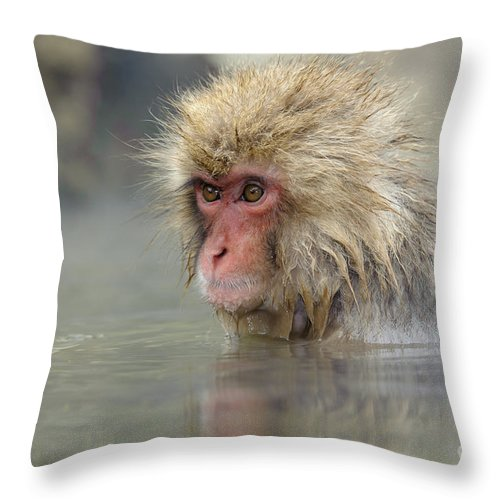 Japanese Macaque Throw Pillow featuring the photograph Snow Monkeys by John Shaw
