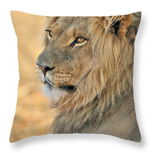 African Throw Pillow featuring the photograph 120118p092 by Arterra Picture Library