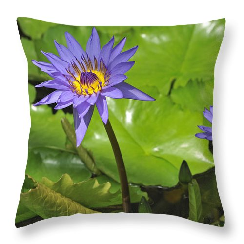 Nymphaea Director G.t Moore Throw Pillow featuring the photograph 120715p199 by Arterra Picture Library