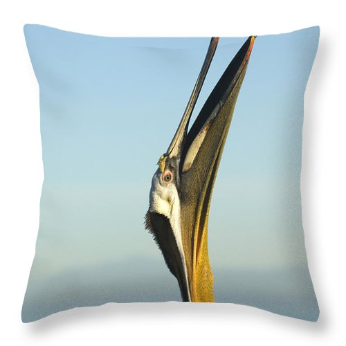 Brown Pelican Throw Pillow featuring the photograph Brown Pelican by John Shaw
