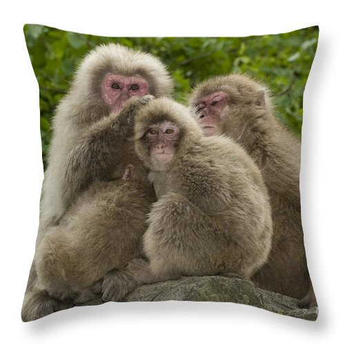 Asia Throw Pillow featuring the photograph Snow Monkey, Japan by John Shaw
