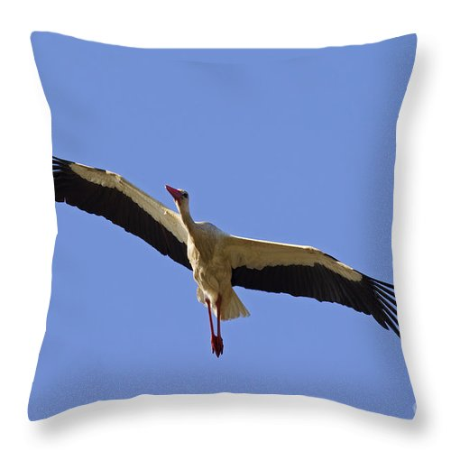 White Stork Throw Pillow featuring the photograph 130201p265 by Arterra Picture Library