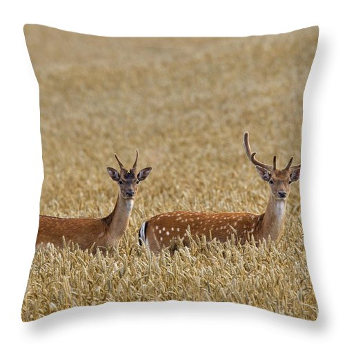 Two Throw Pillow featuring the photograph 130201p299 by Arterra Picture Library