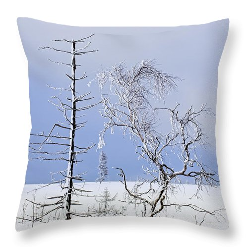 High Fens Throw Pillow featuring the photograph 130201p331 by Arterra Picture Library