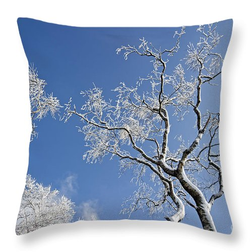 Deciduous Throw Pillow featuring the photograph 130201p336 by Arterra Picture Library