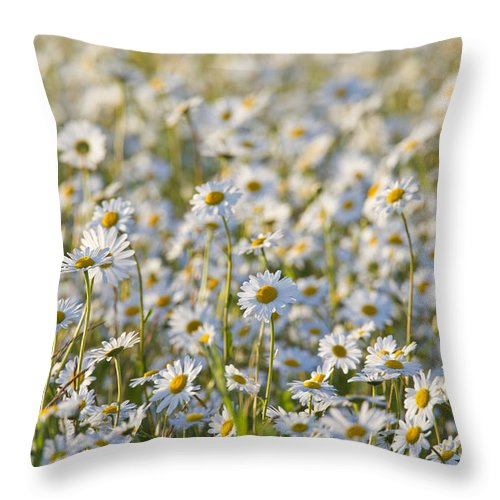 Oxeye Daisy Throw Pillow featuring the photograph 130215p281 by Arterra Picture Library