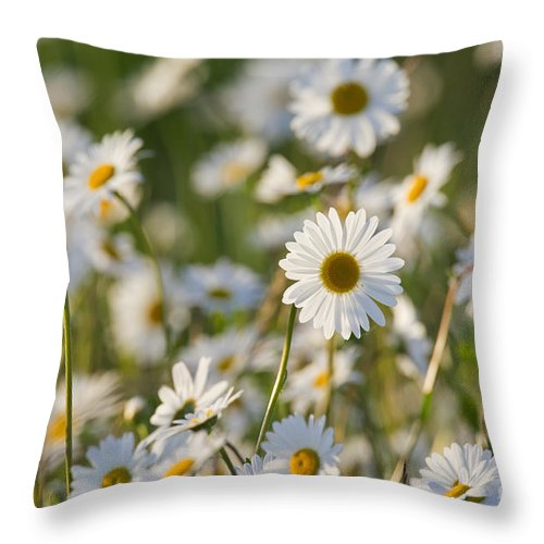 Oxeye Daisy Throw Pillow featuring the photograph 130215p282 by Arterra Picture Library