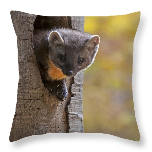 European Pine Marten Throw Pillow featuring the photograph 131114p020 by Arterra Picture Library