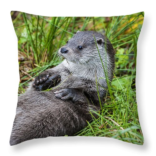 European River Otter Throw Pillow featuring the photograph 140314p373 by Arterra Picture Library