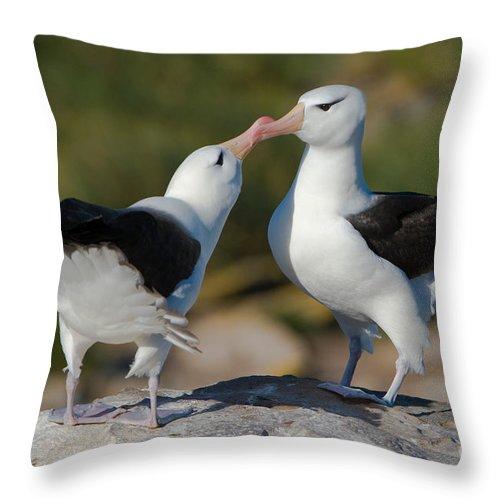 Black-browed Albatross Throw Pillow featuring the photograph Black-browed Albatross by John Shaw