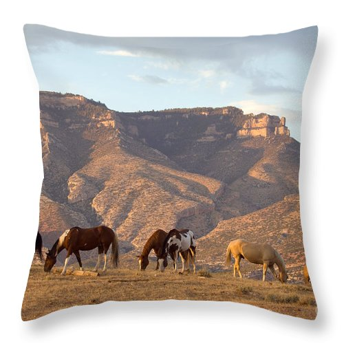 Cowboy Throw Pillow featuring the photograph Cowboy by John Shaw