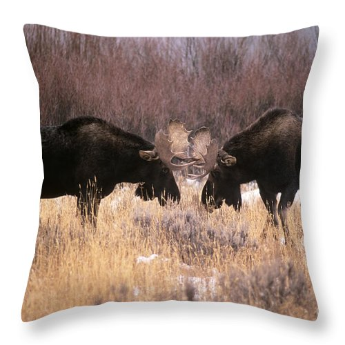 Fauna Throw Pillow featuring the photograph Moose by Art Wolfe