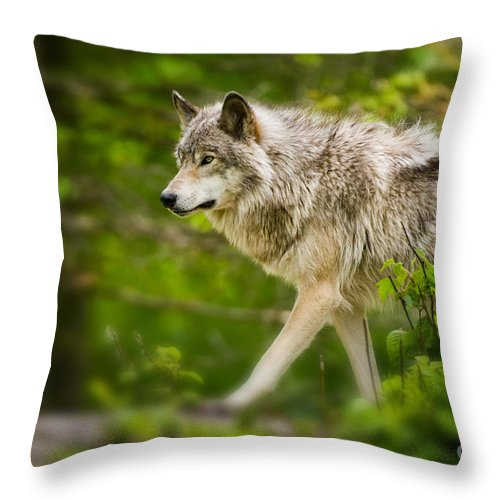 Timber Wolf Photography Throw Pillow featuring the photograph Timber Wolf Pictures by Wolves Only