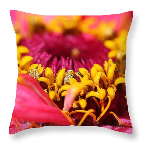 Mccombie Throw Pillow featuring the photograph Zinnia From The Whirlygig Mix by J McCombie