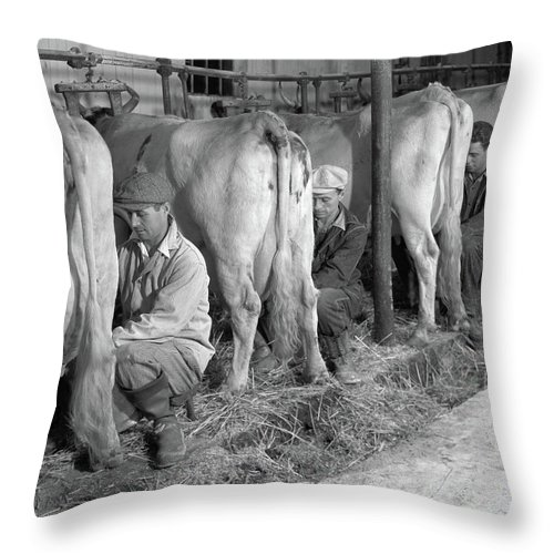 Photography Throw Pillow featuring the photograph 1930s 1940s Three Men Hand Milking by Vintage Images