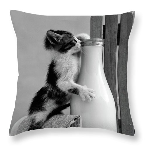 Photography Throw Pillow featuring the photograph 1960s Kitten Straddled On Hind Legs by Vintage Images