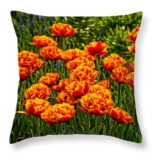 Flowers Throw Pillow featuring the photograph All Together Now by Jeffery L Bowers