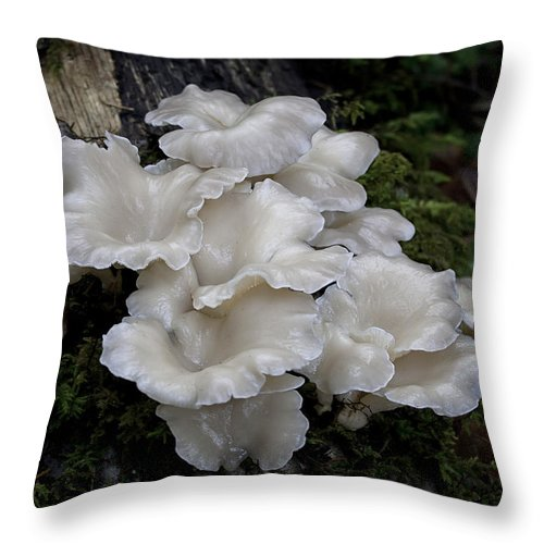 Angel Wings Throw Pillow featuring the photograph Angel Wings by Betty Depee
