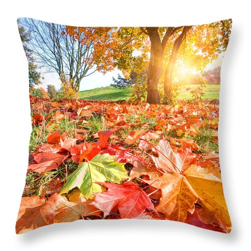 Autumn Throw Pillow featuring the photograph Autumn Fall Landscape In Park by Michal Bednarek