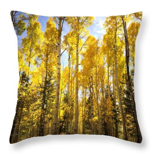Autumn Throw Pillow featuring the photograph Autumn Gold by Saija Lehtonen
