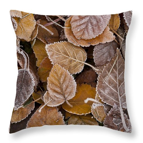 Pacific Northwest Throw Pillow featuring the photograph Autumn Leaves by Jim Corwin