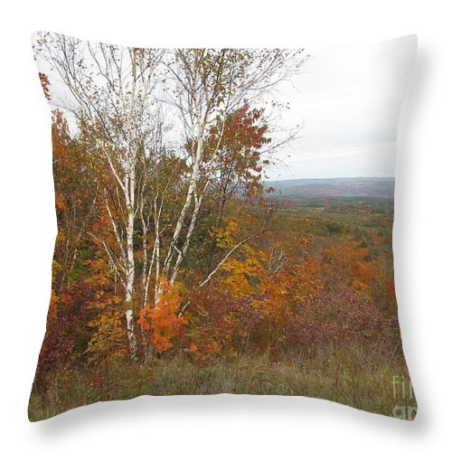 Autumn Throw Pillow featuring the photograph Autumn With Birch by Nancie Johnson