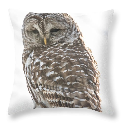Nature Throw Pillow featuring the photograph Barred Owl by Cheryl Baxter