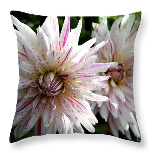 Dahlia Throw Pillow featuring the photograph Beautiful Twins by Christiane Schulze Art And Photography