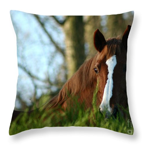Chestnut Horse Throw Pillow featuring the photograph Behind The Fence by Angel Ciesniarska