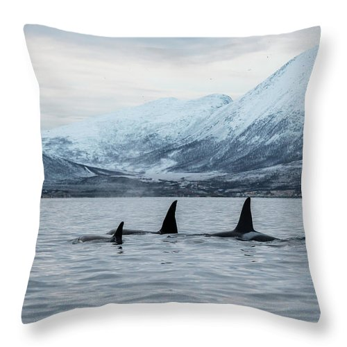 Snow Throw Pillow featuring the photograph 2 Big 2 Small by By Wildestanimal
