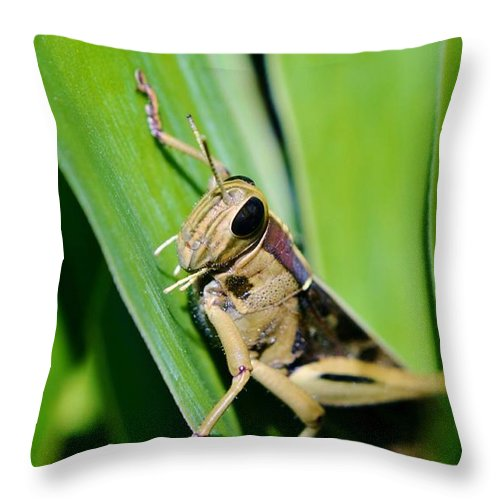 Close Up; Big; Grass Hopper; Yucca; Garden; Insects; Wings; Eyes; Legs; Nature; Green; Leafs; Brown; Black; Macro; Bright Sunlight; Background; Decorative; Palm; Locust; Throw Pillow featuring the photograph Big Grass Hopper by Werner Lehmann