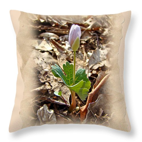Bloodroot Throw Pillow featuring the photograph Bloodroot Wildflower - Sanguinaria Canadensis by Mother Nature