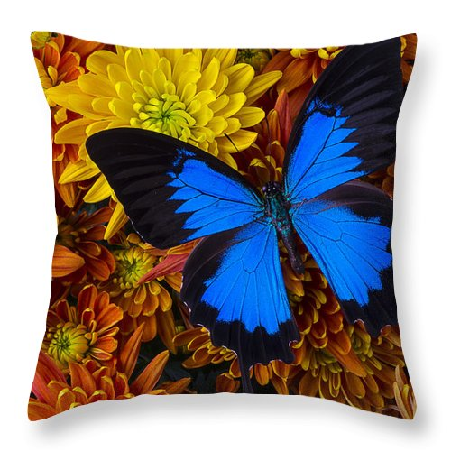 Blue Butterfly Throw Pillow featuring the photograph Blue Butterfly On Mums by Garry Gay