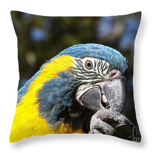 Bird Throw Pillow featuring the photograph Blue Throat Macaw by Melissa Messick